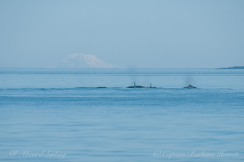 Transients with Mt Rainer