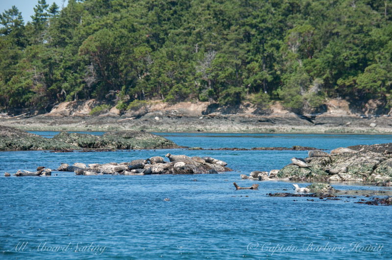Harbor seals south of Turn Island