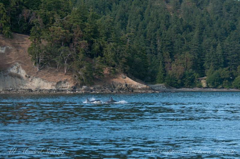 Transient Orcas Blakely Island