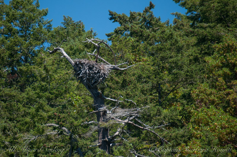 Eagle Nest Blakely Island