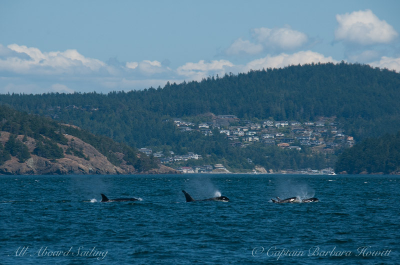 Whales from T65As and 75Bs south of Anacortes