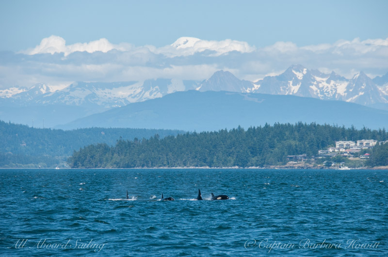 Whales from T65As and 75Bs with Mount Baker