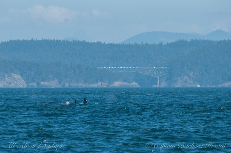 Whales from T65As and 75Bs with Deception Pass Bridge