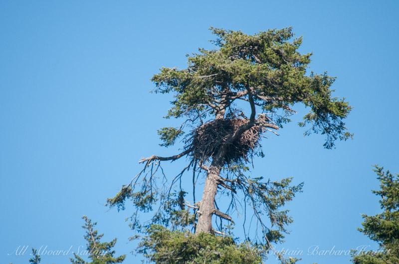 Eagle Nest - Lopez Island