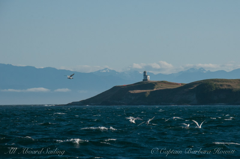 Gulls seem to enjoy the brisk wind off Cattle Point Lighthouse