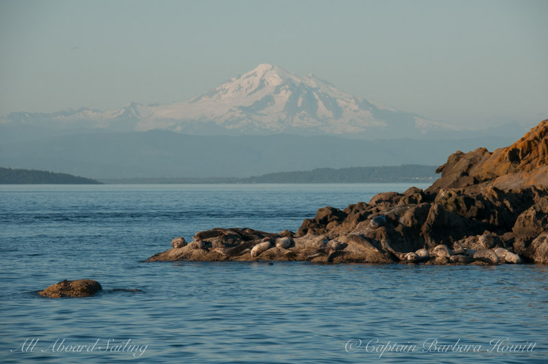 Harbor seals and Mt Baker