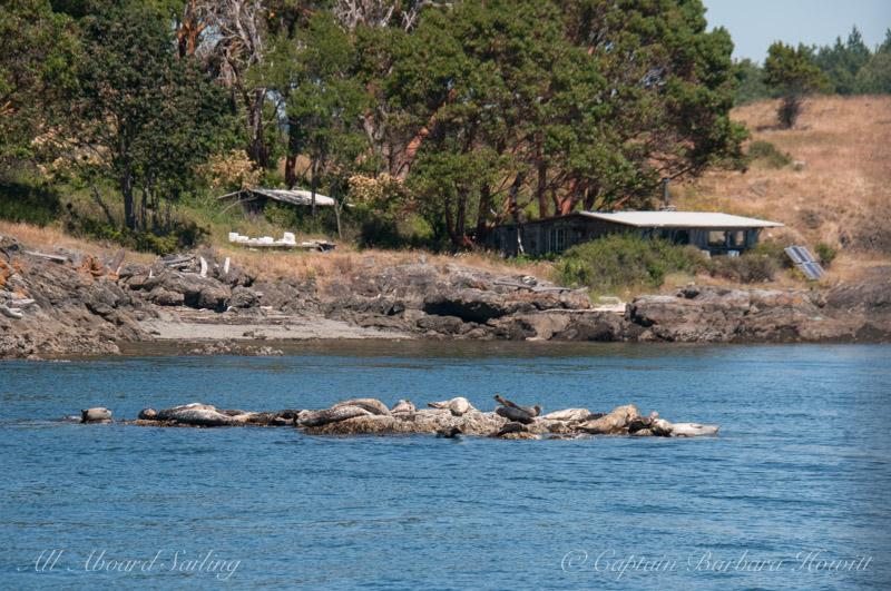Harbor seals and Yellow Island caretaker cabin