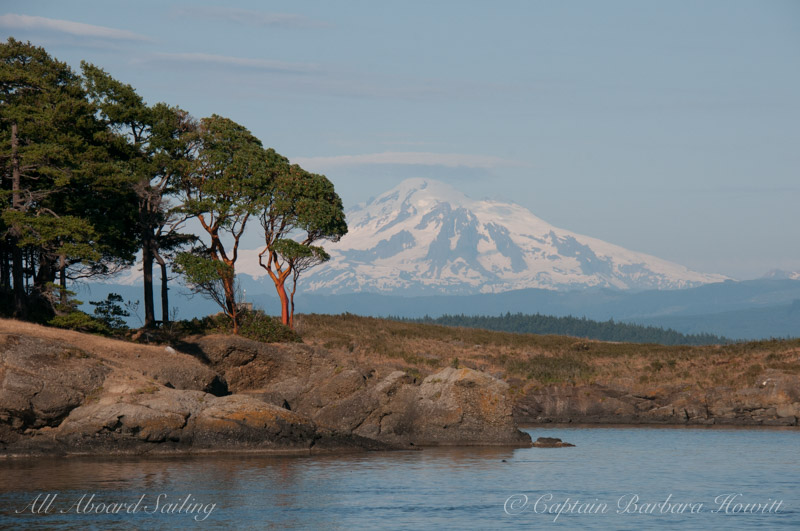 Clark Island Madrone trees and Mt Baker