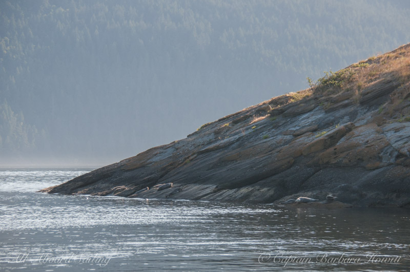 Seals sleeping on southern end of Little Sister Island