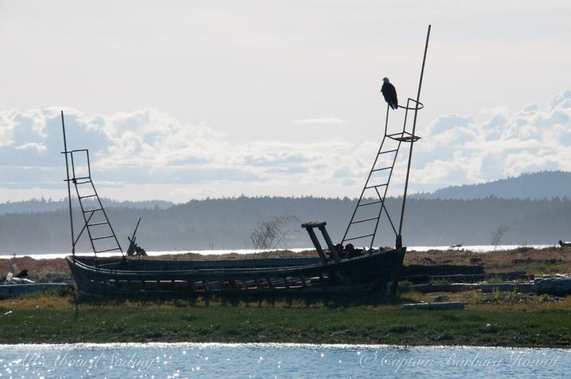 Bald eagle on broken down boat