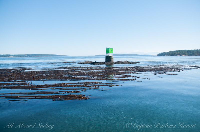 Bull kelp - Turn Rock