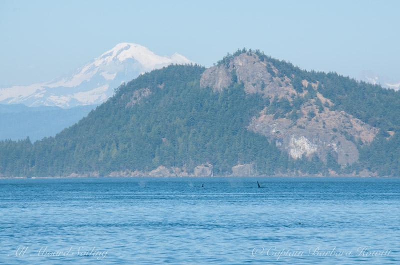 J Pod with Cypress Island