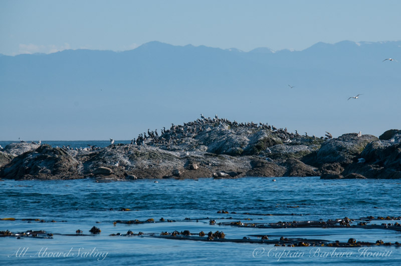 Harbor seals and birds on Whale Rocks