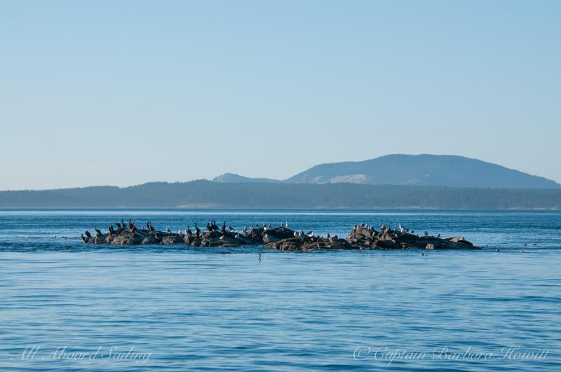 Wildlife on Shark Reef
