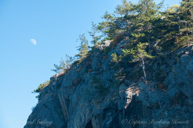 Bald eagle with half moon