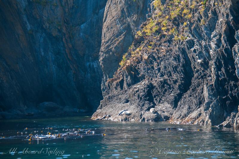 Harbor seals on Colville Island