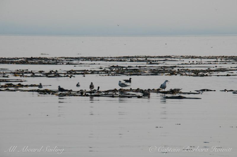 Gulls in strange light