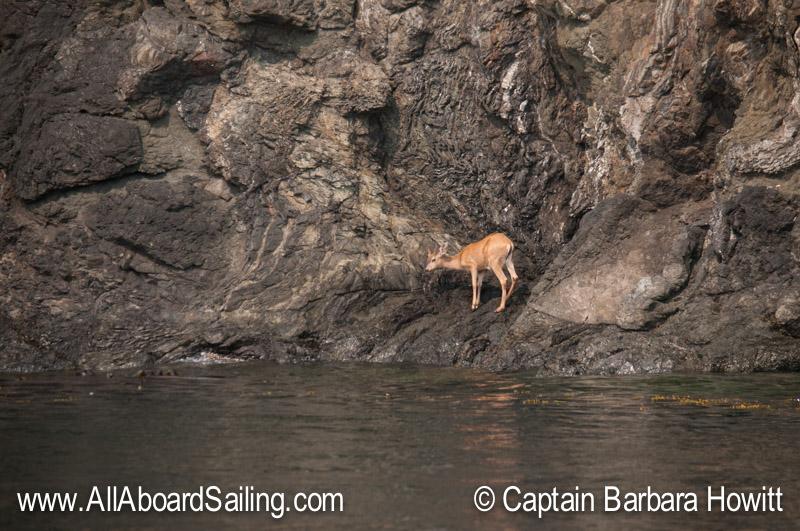 Buck standing on the shoreline at Kellett Bluff