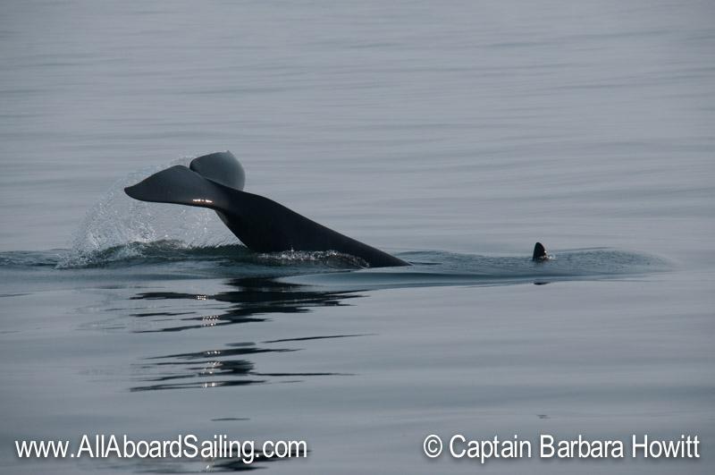 Orca tail lob