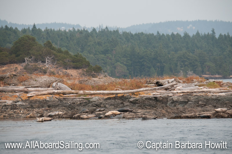 Harbor seals on Low Island