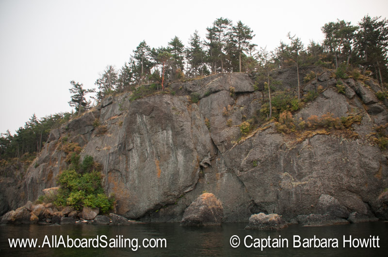 Peregrine falcon cliff