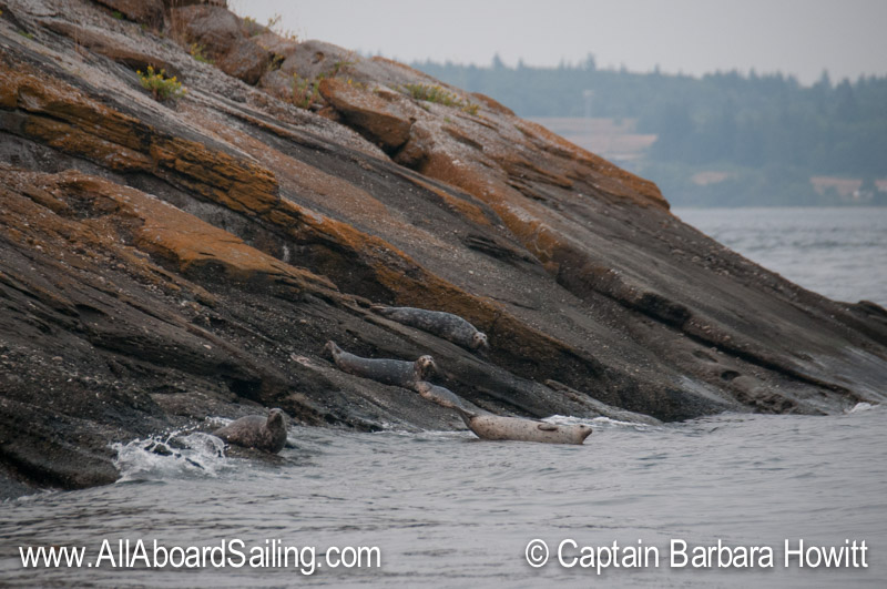 Harbor seals on Little Sister Island