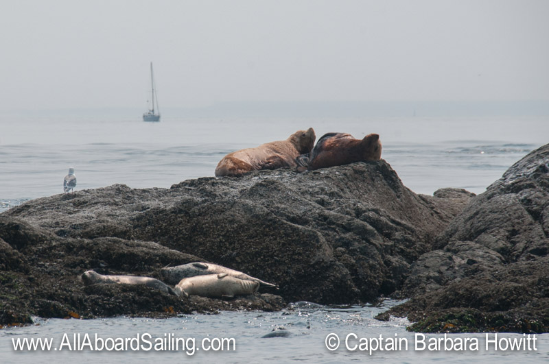 Steller Sea Lions and Harbor Seals