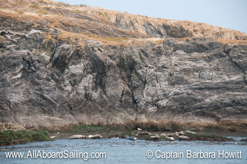 Harbor seals south of Lopez