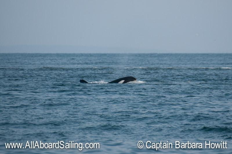 Orca spy peep