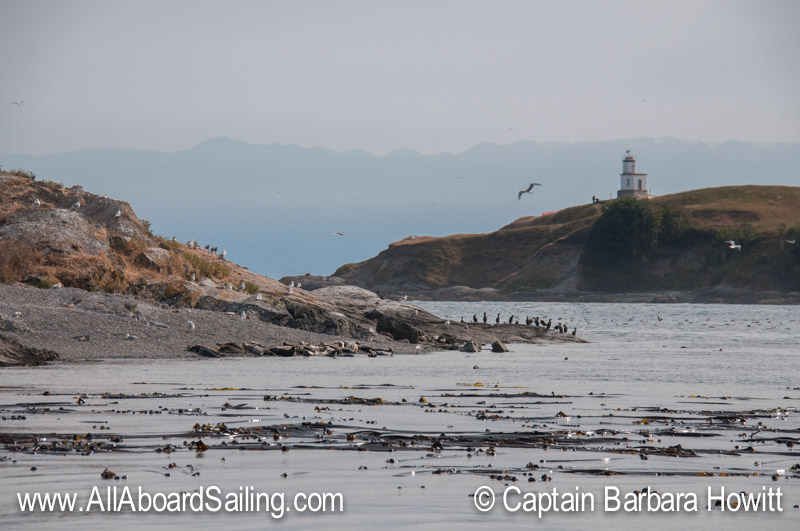 Harbor seals and Cattle Point Lighthouse