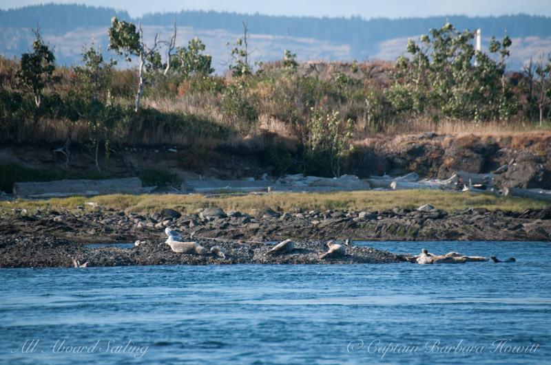 Ripple Island Aspen Grove with Harbor seals