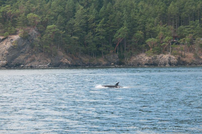 T137D Harney Pass Orcas Island