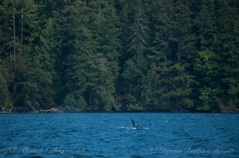 T137A with sibling ventures deep into EastSound Orcas Island