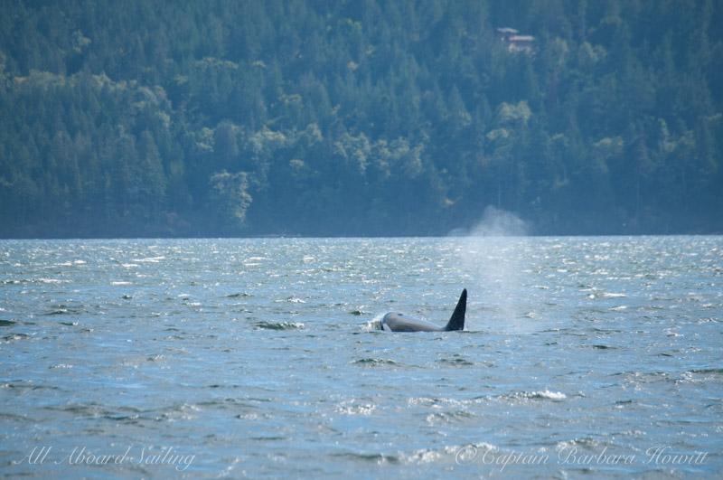 T137A ventures deep into EastSound Orcas Island