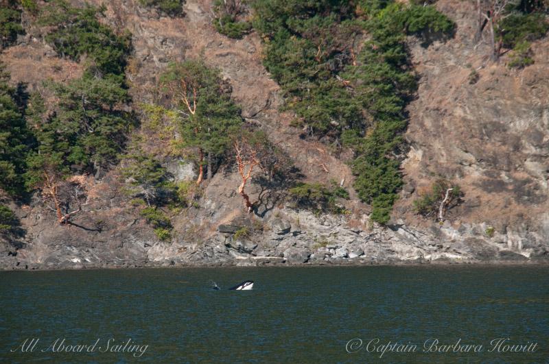 Syphop, Orcas Island