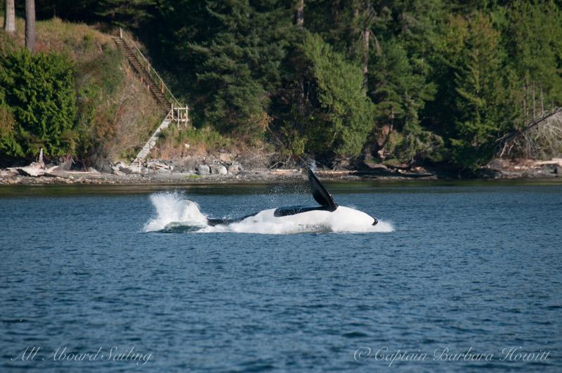 T137A Orca Breach