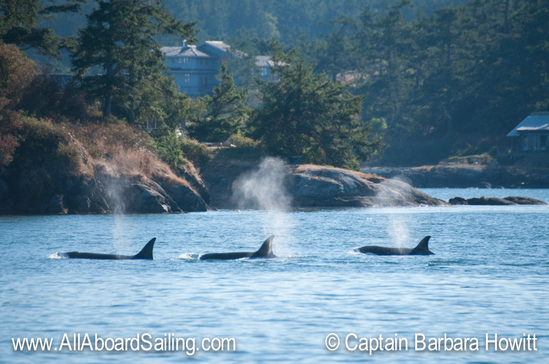 T30, T30b and T30C Griffin Bay San Juan Island