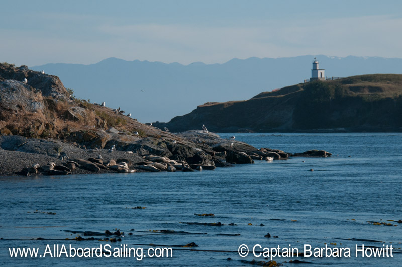 Goose Island and Cattle Point Lighthouse, San JuanI sland