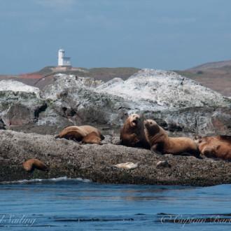 Short summer sail to Whale Rocks
