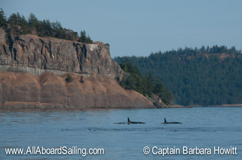 Biggs Orcas Point Disney Waldron Island
