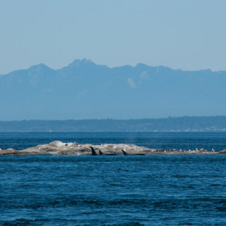 Whale Watching Sailing T65As at Boiling Reef