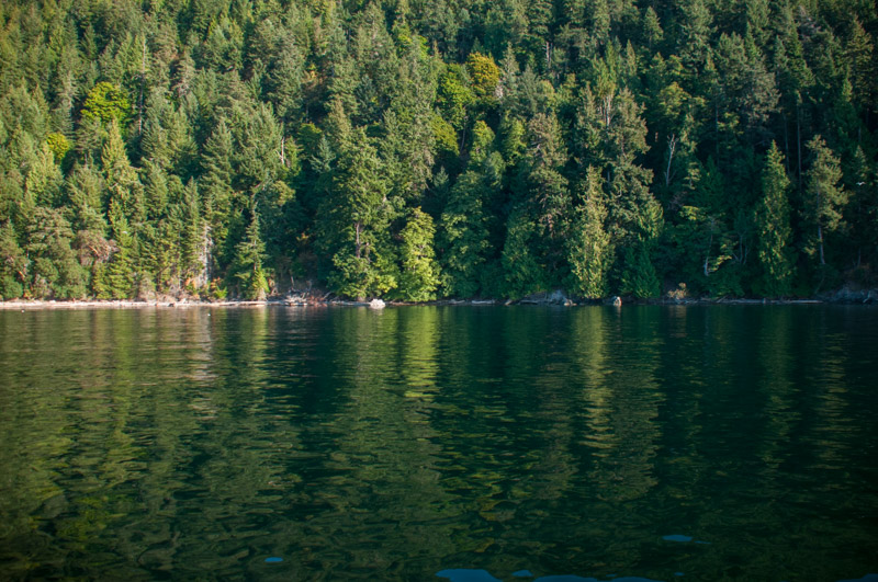 Forest reflections of Presidents Channel, Orcas Island