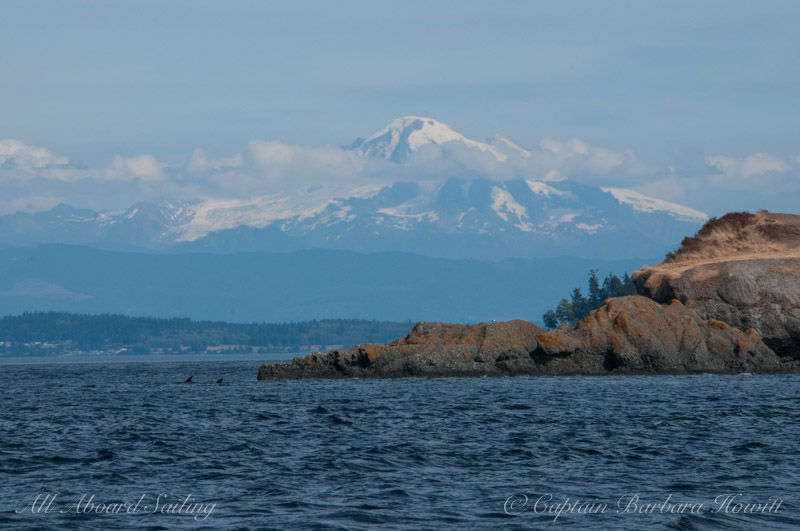 Orcas at Point Doughty, Orcas  Island with Mount Baker