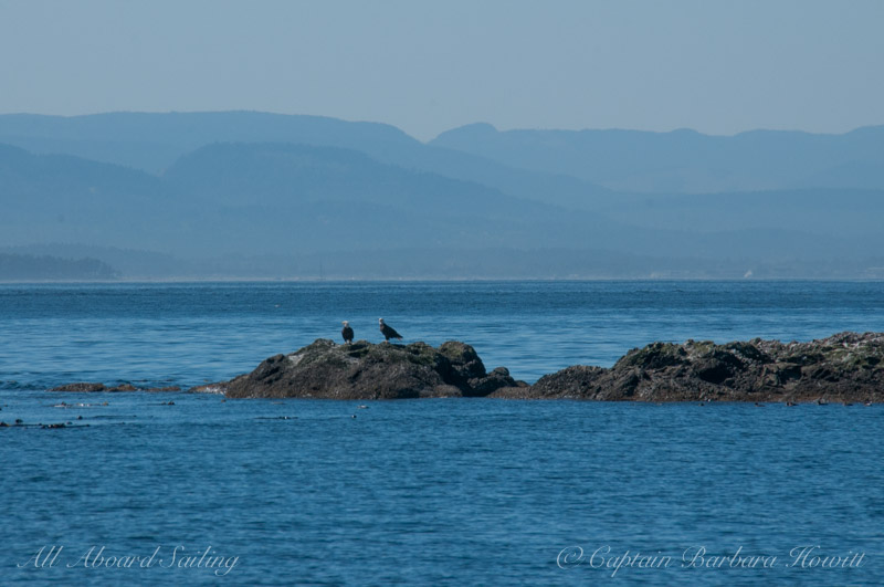 Pair of Bald Eagles, Sentinel Island, Haro Strait, San Juan Islands