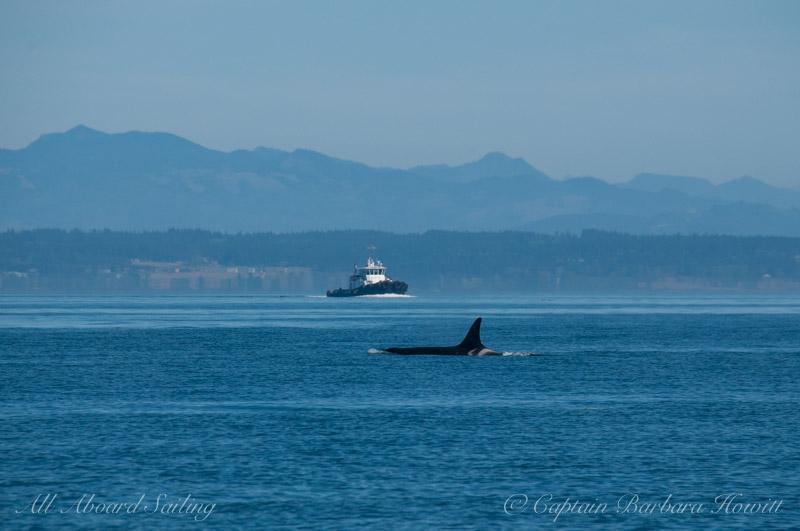 L25 Ocean Sun Southern Resident Orca