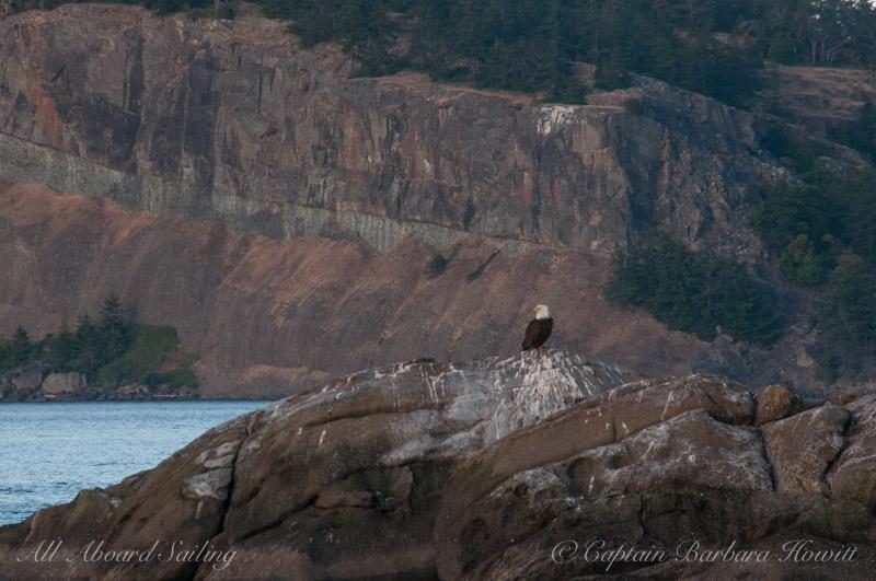 Bald eagle on White Rock