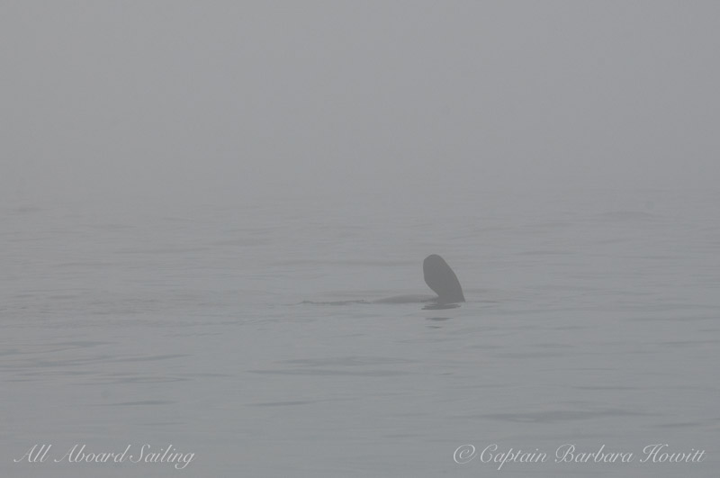 Pectoral fin glides by in the fog
