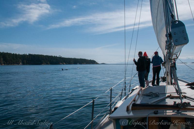 Sailing whale watching San Juan Island