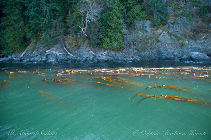 Emerald waters of Presidents Channel Orcas Island