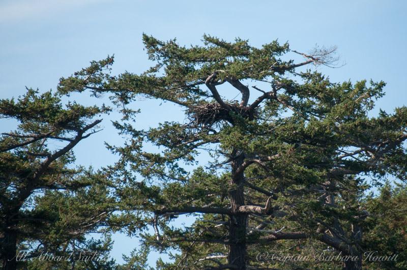 Eagle Nest at Cactus Islands